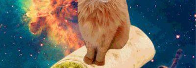 cat sitting on a burrrito