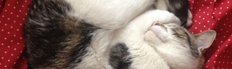 cat asleep, happy