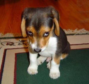 sad puppy apology post